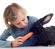 Girl feeds pet rabbit. Little girl feeding baby rabbit with carrot on white background Royalty Free Stock Photos