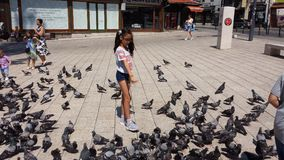Girl feeds the pigeons Royalty Free Stock Images