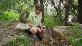 The girl feeds wild monkeys stock video footage