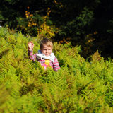 Girl in ferns Stock Photography