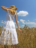 Girl in field. Field of Wheat stock images