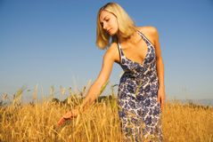 Girl in the field Stock Images