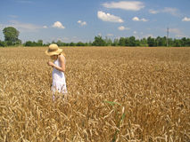 Girl in field. Field of Wheat royalty free stock image