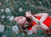 Girl in field of dandelions. Young girl lying in field of dandelion flowers blowing seed heads Royalty Free Stock Photos