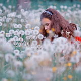 Girl in field of dandelions. Girl relaxing in field on dandelion flowers with clock seed heads Royalty Free Stock Photo