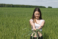 The girl in field with ears in hands. The girl in a wheaten field with ears in hands Royalty Free Stock Image