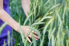 Girl in a field of green wheat Stock Photos