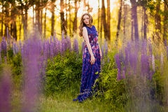 Girl in field of purple wildflowers, sunset on Sunny day Stock Image