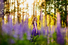 Girl in field of purple wildflowers, sunset on Sunny day Stock Photo