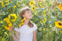 Girl in the field of sunflowers. The girl in the field of sunflowers stock image