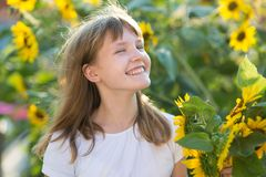 Girl in the field of sunflowers. The girl in the field of sunflowers royalty free stock image