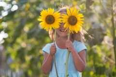 The girl in the field of sunflowers. Girl in the field of sunflowers royalty free stock images