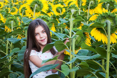 Girl on the field of sunflowers Royalty Free Stock Photo