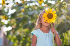 The girl in the field of sunflowers. Girl in the field of sunflowers stock photos