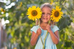 The girl in the field of sunflowers. Girl in the field of sunflowers stock images