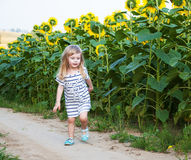 Girl on the field of sunflowers Royalty Free Stock Photos
