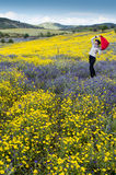 Girl in field with yellow flowers at sunset Royalty Free Stock Photos
