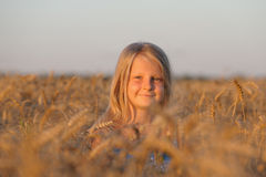 The girl in filed wheats. Stock Photos