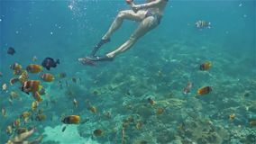 Girl Filming Under Water World Snorkeling Reef Fish Slow Motion. Underwater footage of a girl snorkeling with a group of colorful fish on the coral reef in Nusa stock footage