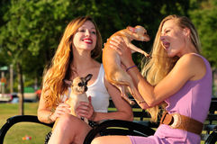 Girl firends playing with puppies royalty free stock image