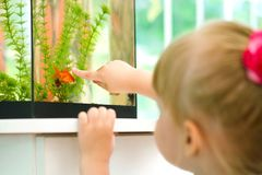 Girl and fish in aquarium Royalty Free Stock Photography