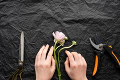 Girl florist lays out a flower tulip. Scissors and a knife. Collect flowers florist royalty free stock photo