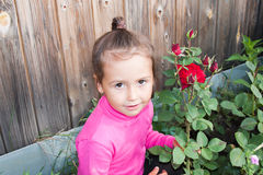 Girl in a flower bed with red roses Royalty Free Stock Image