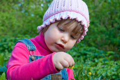 Girl and flower. A little girl picks a flower close-up Stock Images