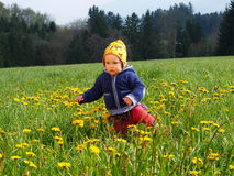 Girl in flower meadow Royalty Free Stock Photo