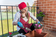 Girl with flowerpot replant flower of african violet. Girl replant flowers of violet in a large pot on the balcony in the spring of the big city Royalty Free Stock Photos