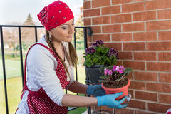 Girl with flowerpot replant flower of african violet. Girl replant flowers of violet in a large pot on the balcony in the spring of the big city Stock Image