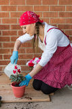 Girl with flowerpot replant flower of cyclamen. Girl replant flowers cyclamen in a large pot on the balcony in the spring of the big city Stock Photos