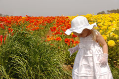 Girl in Flowers. Young girl in a white dress exploring in a field of flowers Royalty Free Stock Photos