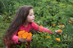 The girl and flowers Royalty Free Stock Images