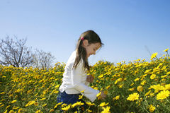 Girl with flowers. Little girl picking up yellow daisies
