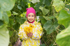 Girl with flowers in a cucumber greenhouse Stock Image