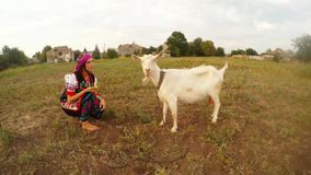 Girl in a folk Ukrainian costume feeds a white goat in the field with apples. Collection, a girl in a traditional Ukrainian traditional folk costume in the stock video
