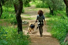 Girl in the forest walks with her beloved dog royalty free stock photos