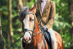 Girl riding a horse in forest Stock Photography