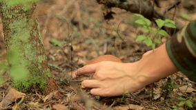 Girl found a mushroom in the forest. And cut it stock footage