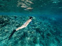 Tourist Snorkeling Turquoise Red Sea Egypt Royalty Free Stock Image