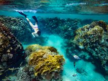 Tourist Snorkeling Turquoise Red Sea Egypt. Girl Freediving Beautiful Red Sea Egypt Royalty Free Stock Images