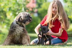Girl with French bulldog and tibetan terrier Stock Images