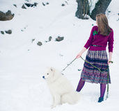 Girl with samoed dog Stock Image