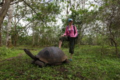 Girl and Galapagos turtle Royalty Free Stock Photos
