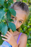 Girl in a garden. The girl in a garden looks out because of foliage Stock Image