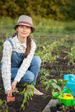 Girl in the garden makes planting seeds Stock Photos