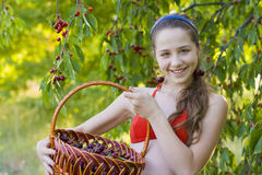 Girl in garden with a sweet cherry basket Royalty Free Stock Photo