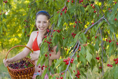 Girl in garden with a sweet cherry basket Stock Photos