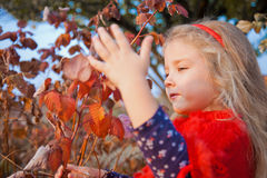Girl in a garden to touch the leaves Stock Image